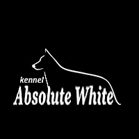 ABSOLUTE WHITE